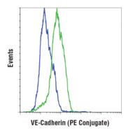 VE-Cadherin (D87F2) XP® Rabbit mAb (PE Conjugate)