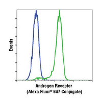 Androgen Receptor (D6F11) XP® Rabbit mAb (Alexa Fluor® 647 Conjugate)